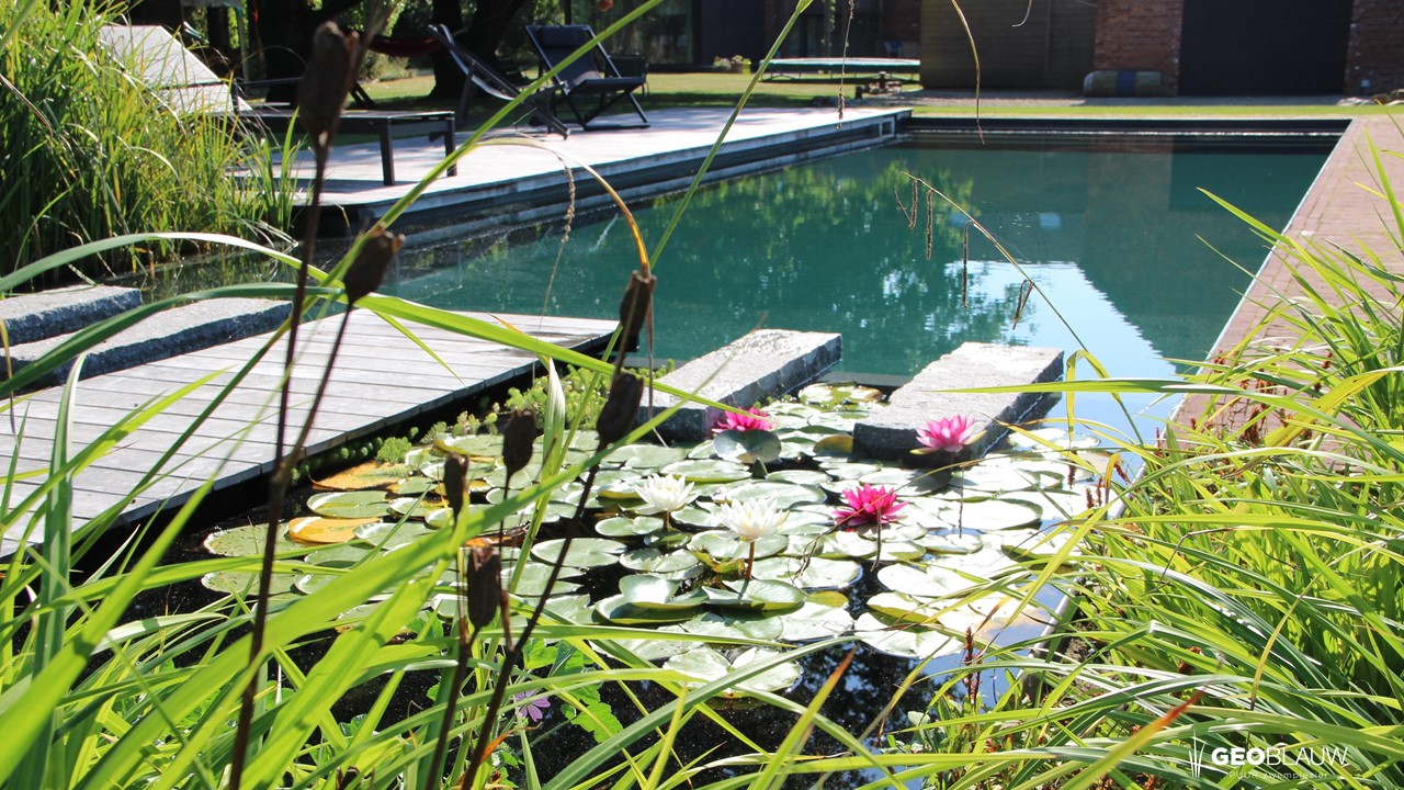 bouwkundige-zwemvijver