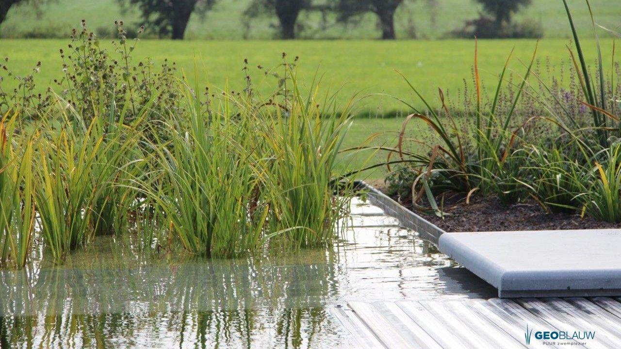 biologisch-gezuiverd-zwemwater